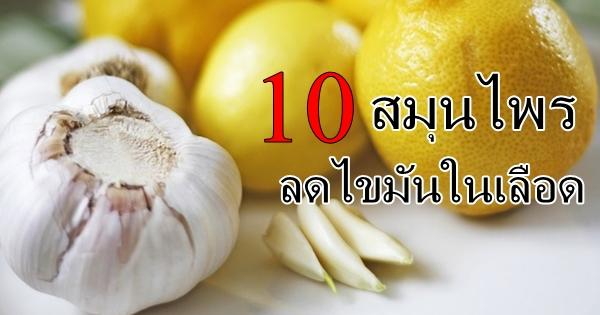 10 สมุนไพรพื้นบ้านลดไขมันในเลือด อาหารเป็นยาคู่ครัวไทย