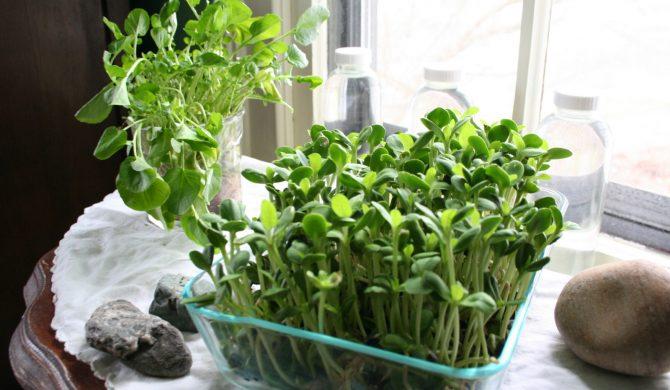 ปลูกผักงอกกินเอง' ด้วยวิธีง่ายๆ ได้สุขภาพ